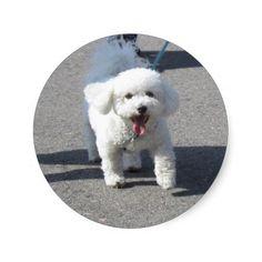 Bichon# Frise #Sticker Round http://zazzle.com/rinchen365flower*  #kids