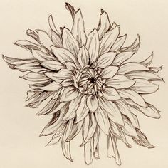 flower drawings | Click on image for larger version. (I recommend it, shrinking didn't ...
