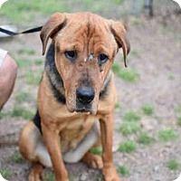 Adopt A Pet :: YOLANDA - Atlanta, GA
