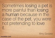 Sometimes losing a pet is more painful than losing a human because in the case of a pet, you were not pretending to love it.