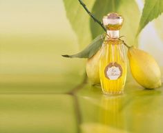 Price: $1,500 for 3,4 ounces bottle    A dazzling composition of fresh citrus fragrance of lemons from Sicily and grapefruits which is ripened under the Italian sun blend specially to create this exquisite fragrance. For the timeless fragrance lovers, the perfume is bottled in a beautiful crystal, which is perfect to gift to someone you love.