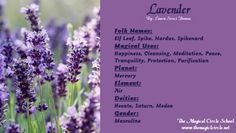 Lavender Magical Properties - The Magical Circle School - www.themagicalcircle.net