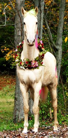 Wedding horse flower crown wreath ❀Flowers in their coats❀ Toni Kami