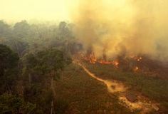 burning forest in Brazil Brazil Amazon Rainforest, Global Warming Issues, Forest Resources, Greenhouse Effect, Fire Prevention, Weed Control, New Forest, Environmental Issues, End Of The World