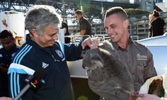Chelsea stars and Mourinho pose with koalas as they explore Sydney