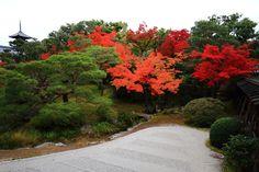 見ごろの紅葉につつまれた京都世界遺産の仁和寺御殿