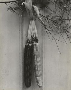 Paul Strand (American, 1890–1976), Corn near Brattleboro, Vermont, 1946 (negative) / 1946 (print), gelatin silver print, 9 9/16 × 7 5/8 inches. Philadelphia Museum of Art, The Paul Strand Collection, purchased with the Annenberg Fund for Major Acquisitions, 2010-14-140. © Paul Strand Archive/Aperture Foundation