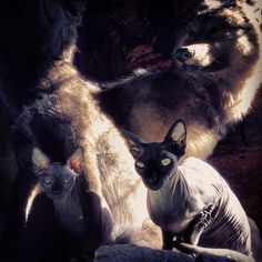 Piaf's baby sister Poe, joins him for a morning sunbath on wolf rock.@Kat Von D[January 14th, 2014 via Adam]