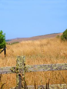 Old fence in Point Reyes - Pixdaus