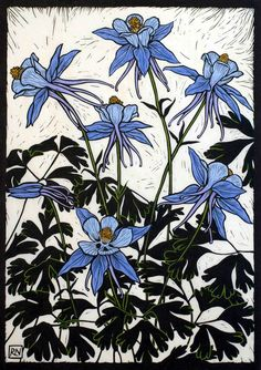 rachel newling -- columbines -- hand colored linocut blue flowers