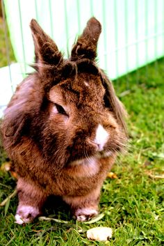 A close friend of mine :) Funny Bunnies, Close Friends, Cute Animal Pictures, Outdoor Life, Just For Fun, Beautiful World, Make You Smile, Childhood Memories, Cuddling