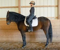 Improve Your Ability to Sit the Trot | Dressage Today