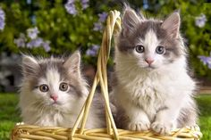 Basket of Goodies! - Cat Health Insurance Costs Less than You Think! http://shrsl.com/?~7hbo #cat