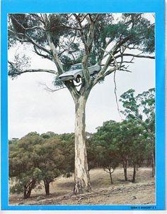 Falcon In a Tree - The Garage Journal Board