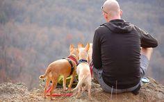 🐶 Découvrez notre article sur #Dressage : Entraînement en laisse de votre chien 🐶