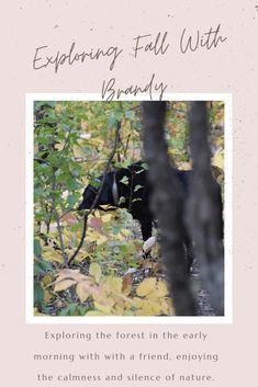 Autumn Morning, Morning Dew, Early Fall, Fall Season, Storytelling, Exploring, Healthy Living, Hiking, Bloom