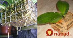 Solution for Rotting Orchid Roots - So Crafty Wooden Basket, Bamboo Basket, Orchid Roots, Plastic Flower Pots, Growing Plants, Orchids, Ale, Gardening, Crafty