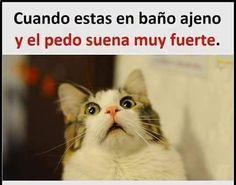 Imagenes de Chistes #memes #chistes #chistesmalos #imagenesgraciosas #humor www.megamemeces.c... | happy | Pinterest
