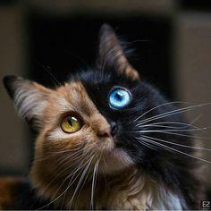 Mixed cat