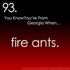 "You know you're from Georgia when.... and I don't mean those little ones that Franklin people call ""fire ants."" Real fire ants hurt..."