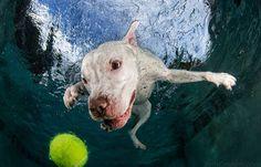 Cachorro pegando bola dentro da agua 9 a24159c2
