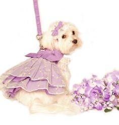 Pin by Uta @LittleDogFashion on Little Dog Fashion Pet Boutique  Pin…