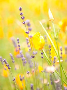 yellow and lavender flower field Spring Flowers, Wild Flowers, Meadow Flowers, Bokeh Photography, Light Spring, Mellow Yellow, Belle Photo, Beautiful Flowers, Floral