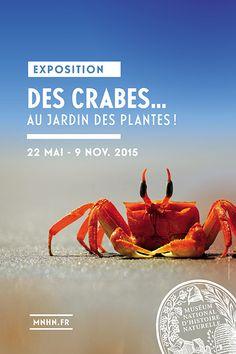 """Affiche exposition """"Des crabes... au Jardin des Plantes"""" ©Shutterstock.com - Jan Niklas Keltsch"""