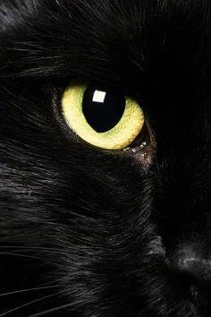 Black cat's Golden eye has you in sight~Em♥
