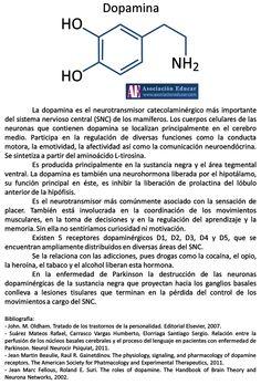 La dopamina interviene en numerosas funciones, como pueden ser la conducta motora o la afectividad. Se sintetiza a partir del aminoácido L-tirosina. Referencia Ilustración neurociencias: Dopamina. (2017).Asociación Educar para el Desarrollo Humano. Retrieved 24 April 2017, from http://www.asociacioneducar.com/ilustracion-dopamina
