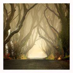 The Dark Hedges - Northern Ireland  The Dark Hedges ..Misty by Klarens-photography