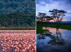 Millions of Pink Flamingos at Lake Nakuru