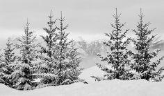 Paysage hivernal des Alpes