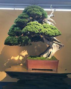 Juniper Bonsai, Tree Lighting, Orchids, Outdoor Living, Landscape, Gardens, Bonsai Trees, Flowers, Outdoor Plants