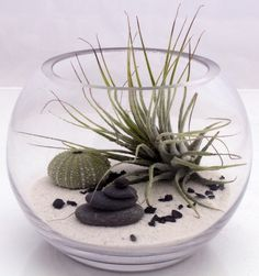 Small desktop zen garden terrarium kit with live Tillandsia fushsii air plant, white sand, sea urchin and stone stack- round fish bowl style. $44.00, via Etsy.