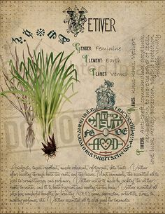 Vetiver Magic plant knowledge has a long history and has a place in the modern witches Book of Shadows. Book of Shadows page. Green Witchcraft, Wiccan Spells, Magic Spells, Magic Book, Magick, Pagan, Magic Herbs, Herbal Magic, Witch Herbs