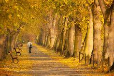 Autumn by RobertAdamec. Please Like http://fb.me/go4photos and Follow @go4fotos Thank You. :-)