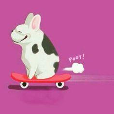 Bulldog on skate board