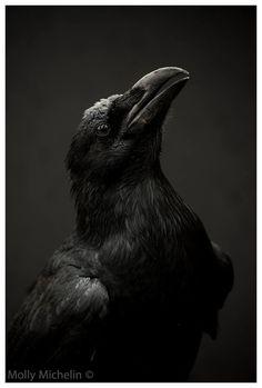 Molly Michelin Photography