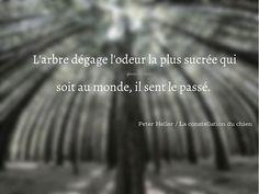 * Les arbres, c'est le temps devenu visible *