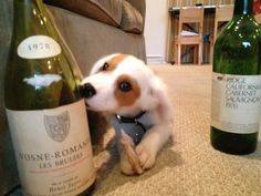 These are a few of my favorite things! Puppies and wine!