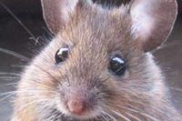 Plants That Repel Mice | eHow