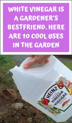 Garden Ideas To Make, Diy Garden Projects, Gardening For Beginners, Gardening Tips, Greenhouse Gardening, Planting Grass, Household Cleaning Tips, Cleaning Hacks, Cleaners Homemade