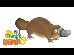 PLATYPUS: Animals for children. Kids videos. Kindergarten | Preschool learning - YouTube