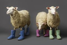 sheep in uggs (kinda mean if you ask me)