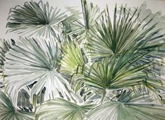 Livistona palm, Brisbane Australia - Janet Johnson Janet Johnson, Fan Palm, Brisbane Australia, Palms, Plants, Drawings