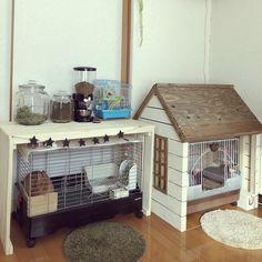 Pet Bunny Rabbits, Pet Rabbit, Bunnies, Bunny Cages, Rabbit Cages, Rabbit Habitat, Rabbit Enclosure, Turtle Homes, Casa Anime