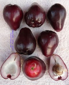 Jambu Bol (Indonesia) Very Rare purple Malay Apple: Rare Fruit Seeds and Exotic Tropical Fruit Seeds Fruit And Veg, Fruits And Vegetables, Fresh Fruit, Strange Fruit, Fruit Seeds, Beautiful Fruits, Exotic Food, Tropical Fruits, Delicious Fruit