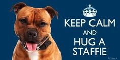 """Staffordshire Bull Terrier RED / Staffie / Staffy Gift - 'KEEP CALM' LARGE colourful 4"""" x 8"""" MAGNET - High Quality flexible magnet for indoor or outdoor use for your Fridge, Car, Caravan or use on any flat metal surface -Water proof and UV resistant."""