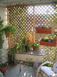 Would help us in the summer Garden Trellis for Condo Balcony Privacy? Backyard Patio Designs, Pergola Patio, Diy Patio, Patio Ideas, Porch Ideas, Pergola Ideas, Balcony Ideas, Pergola Kits, Backyard Ideas